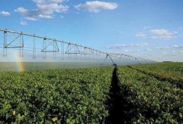 Nem tudo vai mal na pandemia. O agronegócio vive tempo bom | Rui Rezende | Divulgação