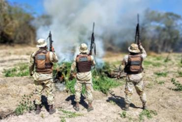 Cerca de duas toneladas de maconha são queimadas pela PM no Oeste da Bahia | Divulgação