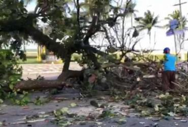 Pássaros aparecem mortos na Av. Soares Lopes após derrubada de árvores