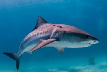 Pescador de Porto Seguro fica surpreso ao encontrar um tubarão em sua rede de pesca | Divulgação