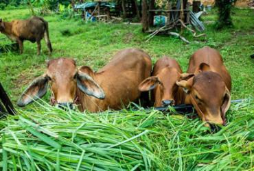 Mercado de boi gordo busca ampliar lucro | Divulgação | Freepik