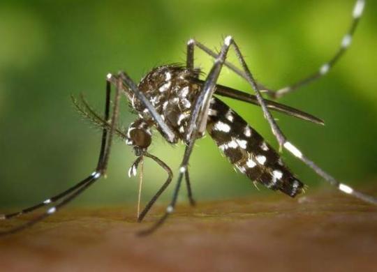 Casos de chikungunya crescem 434% | Divulgação