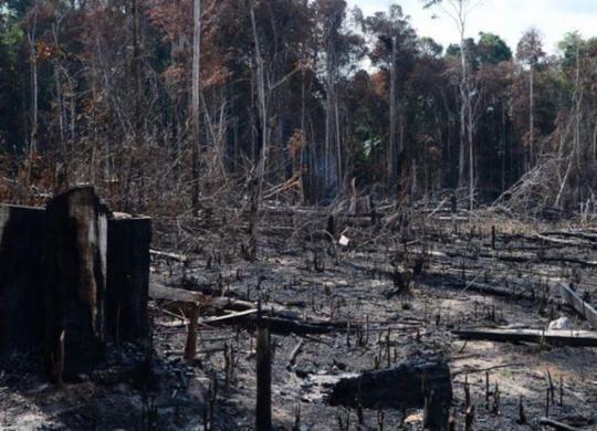 Carta de ex-ministros e ex-presidentes do BC cobra ações contra desmatamento | Agência Brasil