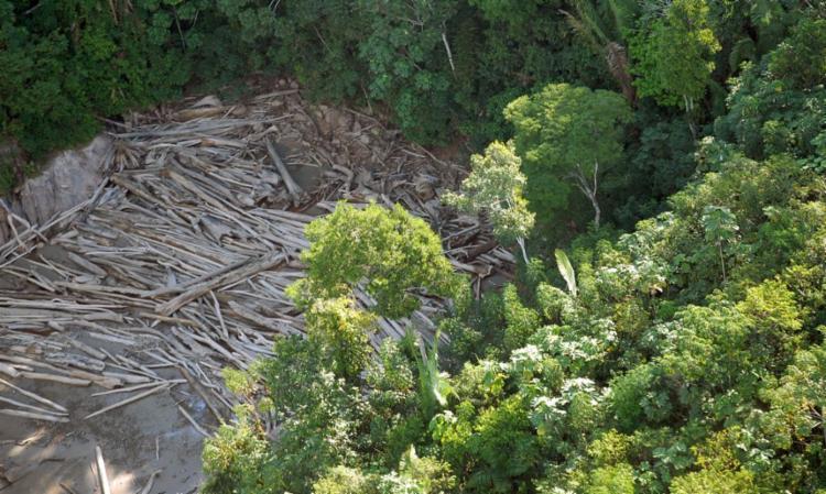 Inpe divulgou que junho teve o maior número de alertas de desmatamento na Amazônia - Foto: Agência Brasil