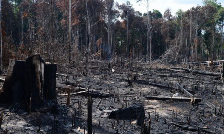 Desmatamento na Amazônia tem levado investidores estrangeiros a pressionarem o governo federal - Foto: Agência Brasil