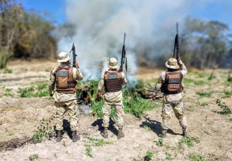 O responsável pela plantação não foi localizado | Foto: Divulgação | SSP - Foto: Divulgação
