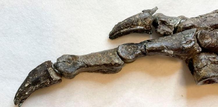 Aratasaurus museunacionali ou nascido do fogo é o nome do achado | Foto: Divulgação | Museu Nacional - Foto: Divulgação | Museu Nacional