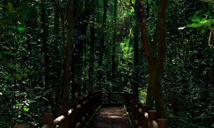 Para o ministro, concessões ajudarão a aumentar visitações aos parques | Foto: Divulgação | ICMBio - Foto: Divulgação | ICMBio