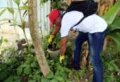 Ações de combate ao Aedes aegypti são intensificadas em Salvador | Foto: