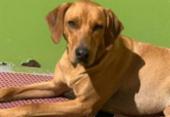 Vale realiza adoção virtual de animais resgatados em Brumadinho | Foto: Divugação
