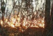 Bombeiros combatem fogo na Serra dos Órgãos pelo terceiro dia seguido | Foto: Divulgação | Parnaso