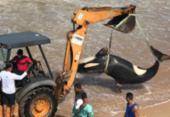 Após ser sacrificado, filhote de orca é retirado de praia em Guarajuba | Foto: Cidadão Repórter | A TARDE