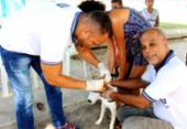 Campanha de vacinação animal terá sistema drive-thru em Salvador | Foto: Divulgação | Secom