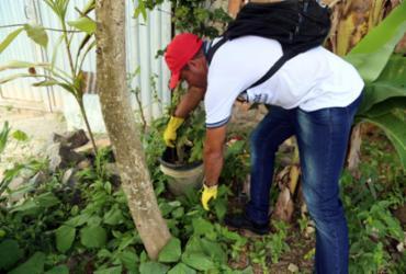 Ações de combate ao Aedes aegypti são intensificadas em Salvador |