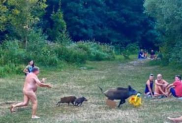 Nudista persegue javali que roubou seu notebook e viraliza na internet | Reprodução | Instagram
