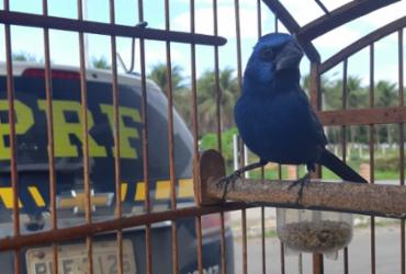 Operação resgata 216 animais silvestres em cinco cidades baianas