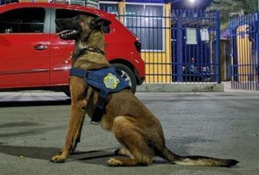 Suspeito de tráfico é preso em Barreiras com ajuda de cão farejador