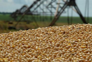 Estimativa para julho é de safra com 250,5 milhões de toneladas, diz IBGE  