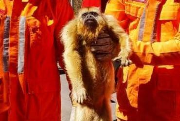 Macaco é resgatado com queimaduras em Barreiras