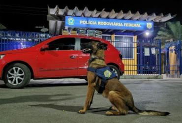Suspeito de tráfico é preso e drogas são apreendidas com auxílio de cão farejador na Bahia