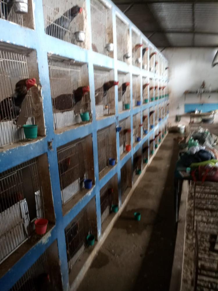 Animais sofriam maus-tratos | Foto: Divulgação | SSP-BA - Foto: Divulgação | SSP-BA