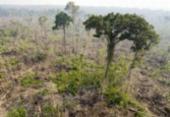 Alemanha vai doar R$ 163 mi para desenvolvimento sustentável na Amazônia | Foto: