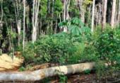 Operação detecta mais de 400 hectares de áreas desmatadas na Bahia | Foto: Divulgação | Ibama
