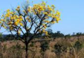 Áreas de biomas brasileiros caíram 8,34% entre 2000 e 2018 | Foto: Toninho Tavares | Agência Brasília