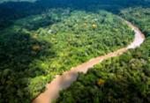 MP deflagra operação para coibir desmatamento da Mata Atlântica na Bahia e 16 estados | Foto: Jody Amiet | AFP