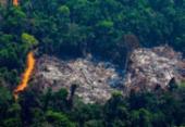 Brasil perdeu 500 mil km² de vegetação nativa em 18 anos, aponta IBGE | Foto: Foto: AFP