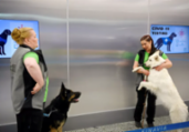 Cães são treinados para farejar infectados por Covid-19   AFP