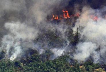 Amazônia registra pequena redução de incêndios em agosto   Carl de Souza   AFP