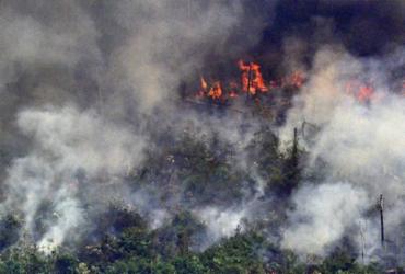 AGU cobra na Justiça R$ 893 milhões de desmatadores da Amazônia | Carl de Souza | AFP