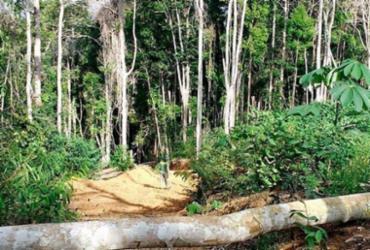 Operação detecta mais de 400 hectares de áreas desmatadas na Bahia | Divulgação | Ibama