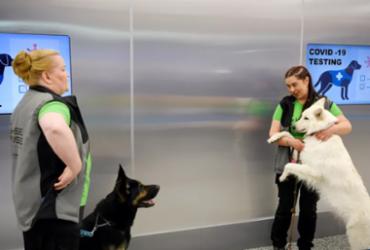 Cães são treinados para farejar infectados por Covid-19 | AFP