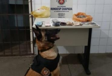 Cão policial ajuda a desativar ponto de drogas em Itaberaba