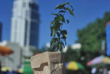 Setor de base florestal celebra o Dia da Árvore nesta segunda | Felipe Iruatã | Ag. A TARDE