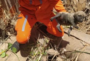 Filhote de cachorro cai em bueiro e é resgatado em Barreiras