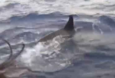 Grupo de orcas cerca barco e surpreende pescadores na Bahia