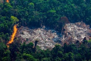 Brasil perdeu 500 mil km² de vegetação nativa em 18 anos, aponta IBGE | Foto: AFP
