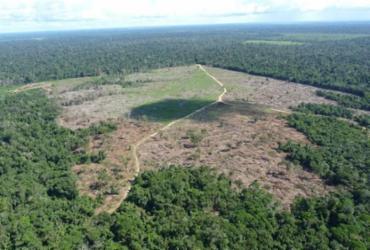 Liminar bloqueia R$ 4,5 milhões de desmatador da Amazônia em Mato Grosso | Foto: IBAMA