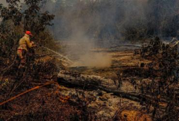 Produtores rurais rejeitam estatuto para proteger Pantanal mesmo após queimadas | Mayke Toscano | Secom-MT