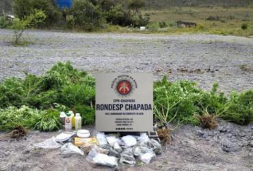 Trio é preso e plantação de maconha é desmontada em Mucugê
