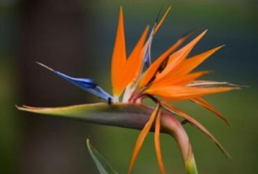 Com a chegada da Primavera, psicóloga afirma que as flores podem impactar na saúde mental | Marcello Casal Jr. | Agência Brasil