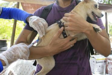Campanha imunizará 70 mil animais   Edilson Lima   Ag. A TARDE   29.9.2016