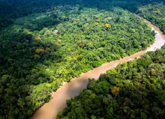 MP deflagra operação para coibir desmatamento da Mata Atlântica na Bahia e 16 estados | Jody Amiet | AFP
