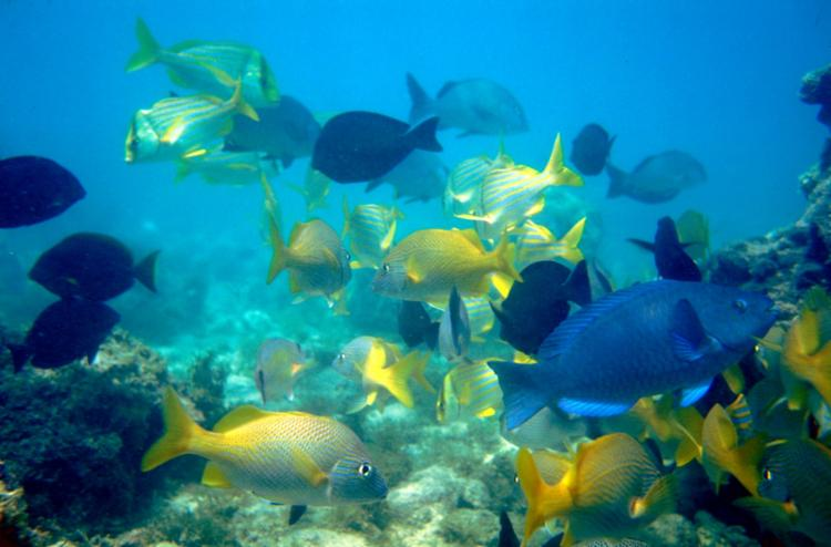 Todos os pontos de mergulho livre e autônomo foram reabertos | Foto: Marcello Lourenço | ICMBio - Foto: Marcello Lourenço | ACMBio