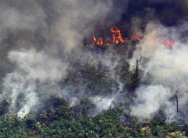 Incêndios na Amazônia diminuíram 5% em agosto - Foto: Carl de Souza   AFP
