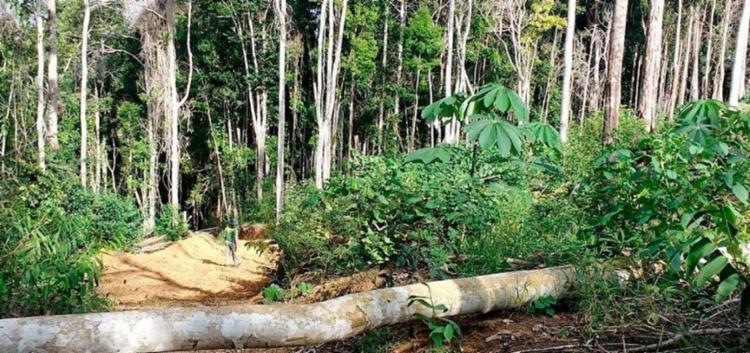 Valor total das multas aplicadas foi de R$842 mil   Foto: Divulgação   Ibama - Foto: Divulgação   Ibama