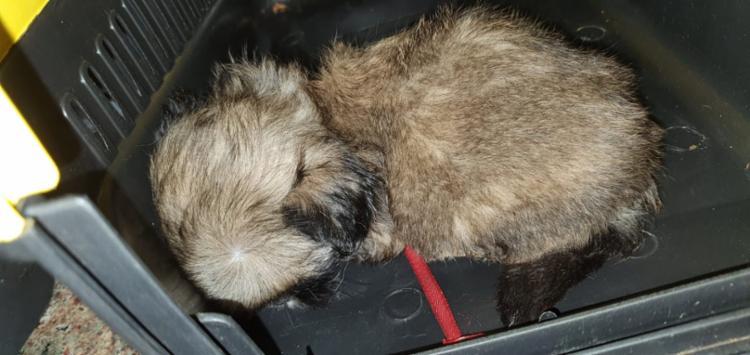 Os animais estavam em um ambiente escuro, sem ventilação, expostos a temperatura elevada e debilitados | Foto: Divulgação | PRF - Foto: Divulgação | PRF